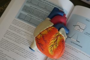 model heart open on a textbook