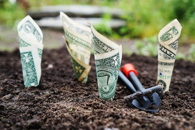 rolled up dollar bills planted in soil like plants.